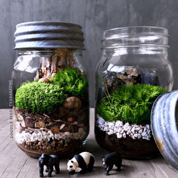 Earth Day Mason Jar Terrarium Kits